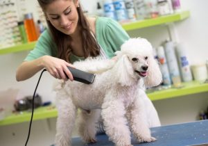 PetCPR+ for Groomers